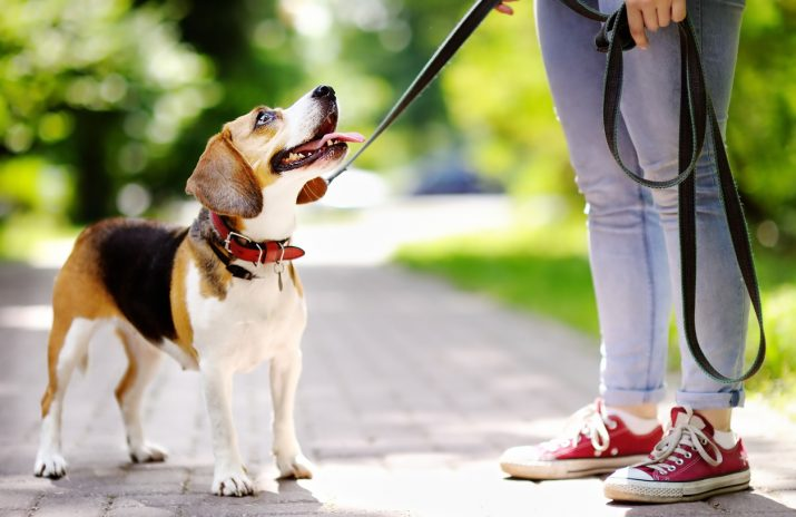 Budgeting Lesson: The Cost of Buying a Dog
